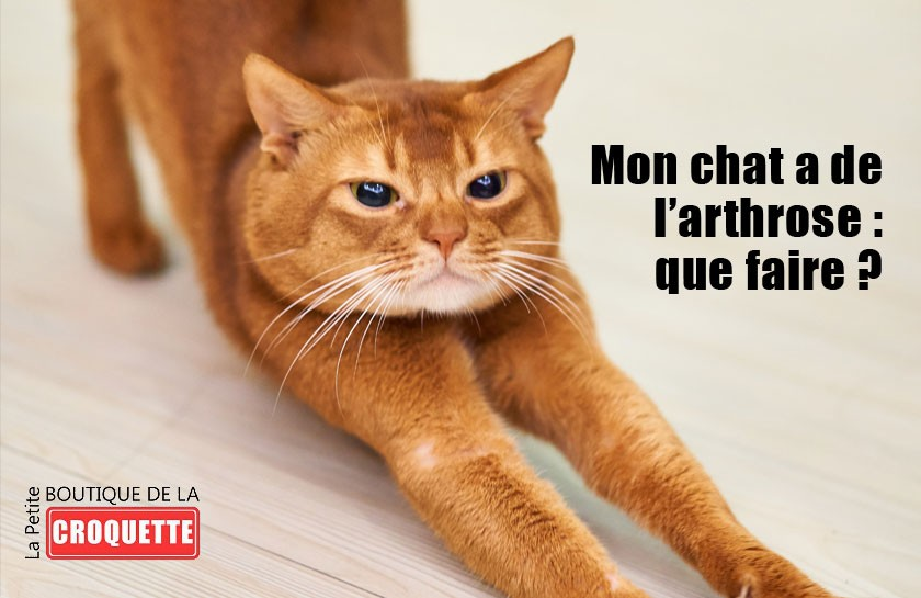 Mon chat a de l'arthrose : que faire ?
