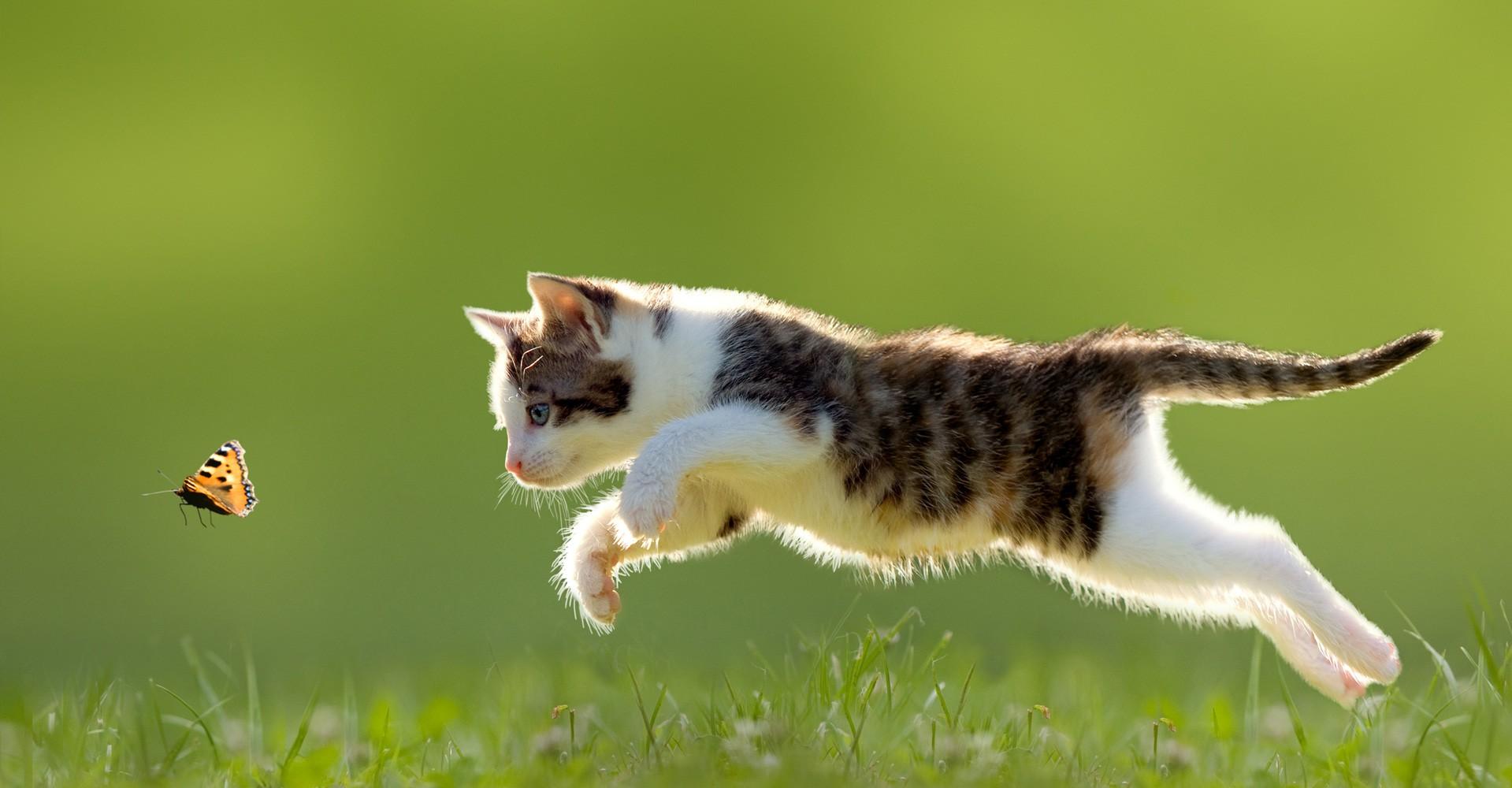 Croquettes naturelles chat
